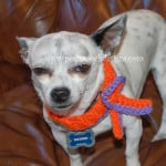 Against Animal Cruelty and Abuse Ribbons ~ Sara Sach - Posh Pooch Designs