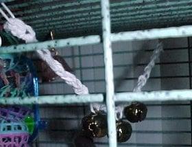 Bird Toy ~ Crochet 'N' More