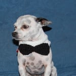 Bow Tie Collar ~ Sara Sach - Posh Pooch Designs