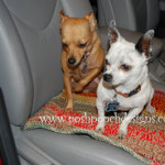 Crochet Car Blanket ~ Sara Sach - Posh Pooch Designs