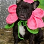 Blooming Dog by Linda Cyr for Red Heart