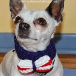 Patriotic Bow Tie For Dogs, Pets and Humans by Sara Sach of Posh Pooch Designs