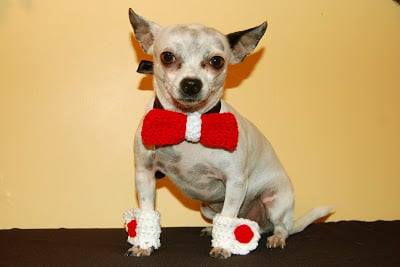 Bow Tie Collar Slide and Matching Cuffs by Sara Sach of Posh Pooch Designs