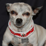 Candy Cane Collar by Sara Sach of Posh Pooch Designs