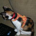 Kitty Harness ~ NyanPon.com
