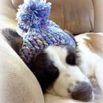 A Silly Hat for My Silly Dog ~ Jennifer Gregory - Niftynnifer's Crochet & Crafts