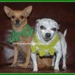 Clover Dog Collar ~ Sara Sach – Posh Pooch Designs