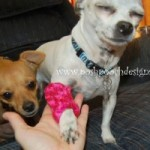 Leg Warmers for Dogs ~ Sara Sach – Posh Pooch Designs