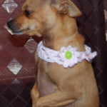 Lattice Dog Collar ~ Sara Sach - Posh Pooch Designs
