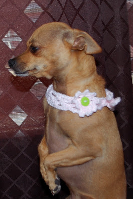 Lattice Dog Collar ~ Sara Sach - Posh Pooch Designs