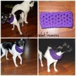 Lacy Cowl for Pup ~ Manda Proell – MandaLynn's Crochet Treasures