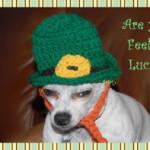 Leprechaun Dog Hat ~ Sara Sach – Posh Pooch Designs