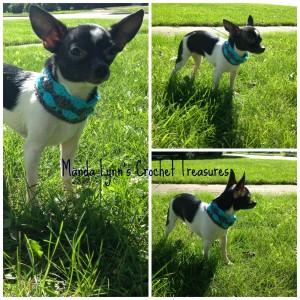 Shell Stitch Cowl for Pup ~ Manda Proell - MandaLynn's Crochet Treasures