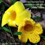 Golden Trumpet Vine ~ Erangi Udeshika – Crochet For You