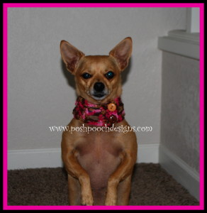 Lace and Buttons Dog Collar ~ Sara Sach - Posh Pooch Designs