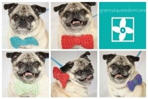 Pug Bowtie ~ Grannysquaredontcare