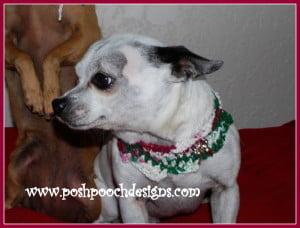 Christmas Candy Dog Cowl ~ Sara Sach - Posh Pooch Designs