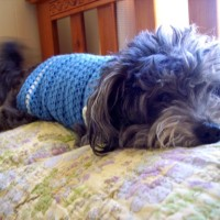 Size Small Dog Sweater ~ Stitch11