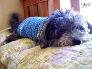 Size Small Dog Sweater ~ Stitch11