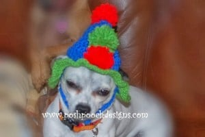 Birthday Dog Hat ~ Sara Sach - Posh Pooch Designs