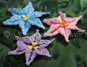 Spring Star Flower ~ Snowcatcher