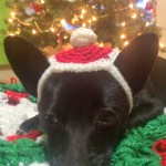 Decorative Christmas Headpiece ~ Elisabeth Spivey - Calleigh's Clips & Crochet Creations