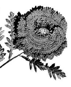 Poppy Pattern ~ Free Vintage Crochet
