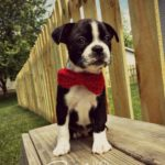 Boston Bow Tie by Stitch11