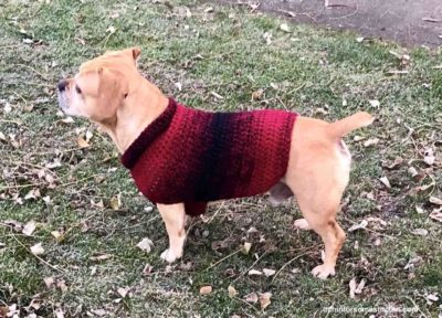 Quick and Easy Medium-size Dog Sweater by RaeLynn Endicott from Itchin' for some Stitchin'