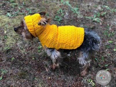 Small Dog Hoodie Sweater by RaeLynn Endicott