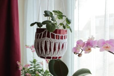 Twisted Crochet Plant Pot Cover by Veronika Cromwell from Blue Star Crochet. The image shows a small plant hanging near a window in a crocheted pot cover.